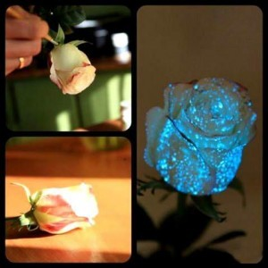 Живые цветы светящиеся краски